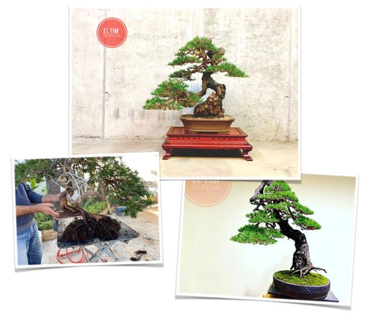 aprende bonsai de la mano de expertos - WBU